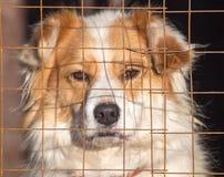 Retrato de un perro en una jaula Foto de archivo libre de regalías
