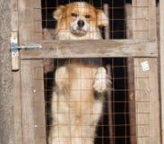 Retrato de un perro en una jaula Imagen de archivo libre de regalías