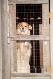 Retrato de un perro en una jaula Imagenes de archivo