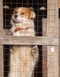 Retrato de un perro en una jaula Fotografía de archivo libre de regalías