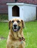 Retrato de un perro guardián fotografía de archivo
