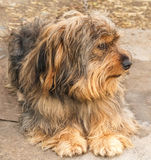 Retrato de un perro hermoso Fotografía de archivo
