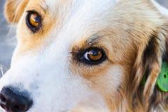 Retrato de un perro perdido precioso Fotos de archivo