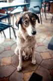 Retrato de un perro triste que se sienta en el piso fotografía de archivo
