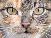 Retrato de un primer carnívoro del gato El gato mira el spo fotos de archivo libres de regalías