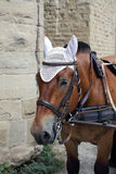 Retrato de un primer de la cabeza de caballo fotos de archivo