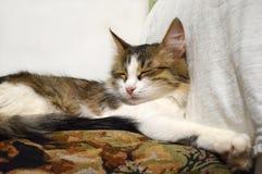 Retrato de un primer tricolor soñoliento encantador del gatito en la almohada foto de archivo libre de regalías