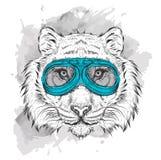 Retrato de un tigre en vidrios de la motocicleta Ilustración del vector Imagenes de archivo