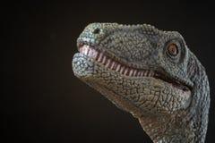 Retrato de un velociraptor en fondo negro fotos de archivo libres de regalías