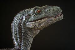 Retrato de un velociraptor en fondo negro foto de archivo