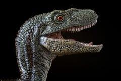Retrato de un velociraptor en fondo negro fotografía de archivo libre de regalías