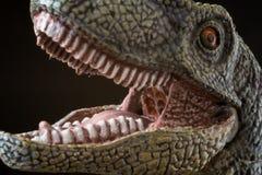 Retrato de un velociraptor en fondo negro imagenes de archivo