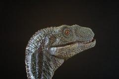 Retrato de un velociraptor en fondo negro imagen de archivo libre de regalías
