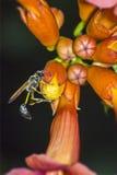 Retrato de una avispa Fotos de archivo libres de regalías
