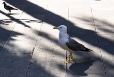 Retrato de una gaviota solitaria en la ciudad en el cuadrado imagen de archivo