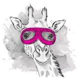 Retrato de una jirafa en vidrios de la motocicleta Ilustración del vector Foto de archivo