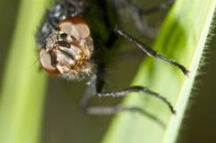 Retrato de una mosca en verde Imágenes de archivo libres de regalías