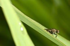 Retrato de una mosca en verde Fotografía de archivo