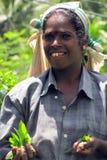 Retrato de una muchacha del Tamil que escoge té en plantaciones imagen de archivo libre de regalías