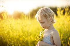 Retrato de una muchacha en un campo con las flores amarillas Imagen de archivo libre de regalías