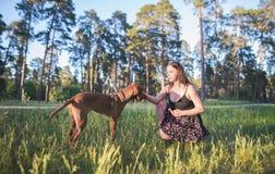 Retrato de una muchacha que se sienta en la hierba y los perros en un parque contra fondo de los árboles imagen de archivo