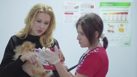 Retrato de una mujer bastante joven con un peque?o perro en sus brazos y un veterinario con un estetoscopio en un veterinario metrajes
