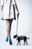 Retrato de una mujer en el estudio. pequeño perro Fotografía de archivo libre de regalías