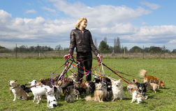 Sentada del perro Fotos de archivo