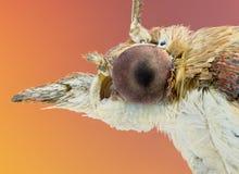 Retrato de una polilla fotografía de archivo