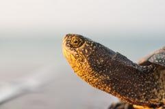 Retrato de una tortuga en el perfil fotos de archivo libres de regalías