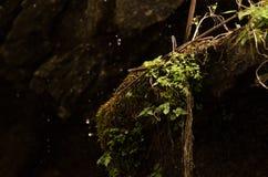 Retrato del árbol, Dharamshala, la India Imagenes de archivo