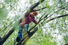 Retrato del aire libre del muchacho preescolar lindo que sube un ?rbol foto de archivo