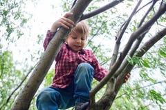 Retrato del aire libre del muchacho preescolar lindo que sube un ?rbol imagenes de archivo