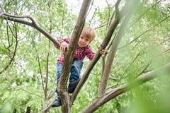 Retrato del aire libre del muchacho preescolar lindo que sube un ?rbol fotos de archivo libres de regalías