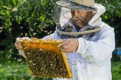 Retrato del apicultor con el panal Imagenes de archivo