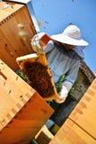 Retrato del apicultor que trabaja con las células de la miel Foto de archivo
