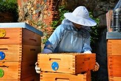 Retrato del apicultor que trabaja con las células de la miel Fotografía de archivo libre de regalías