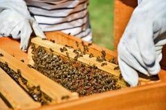 Retrato del apicultor que trabaja con las células de la miel Foto de archivo libre de regalías