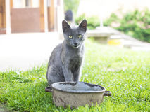 Retrato del arco cercano del gato gris con agua Fotos de archivo libres de regalías