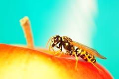 Retrato del avispón, retrato de la abeja Imagen de archivo