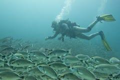Retrato del buceador mientras que se zambulle dentro de una escuela de pescados bajo el agua foto de archivo