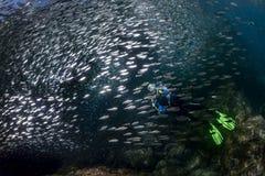 Retrato del buceador mientras que se zambulle dentro de una escuela de pescados bajo el agua foto de archivo libre de regalías