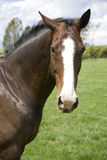 Retrato del caballo Foto de archivo libre de regalías