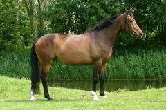 Retrato del caballo Fotografía de archivo