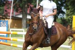 Retrato del caballo de Brown durante la competencia Foto de archivo libre de regalías