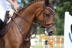 Retrato del caballo de Brown durante la competencia Imágenes de archivo libres de regalías