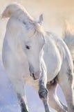 Retrato del caballo en el movimiento imagenes de archivo
