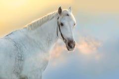 Retrato del caballo en la puesta del sol Imagen de archivo libre de regalías