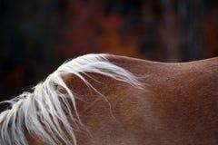 Retrato del caballo hermoso Foto de archivo libre de regalías