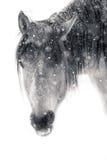 Retrato del caballo Nevado Imagen de archivo
